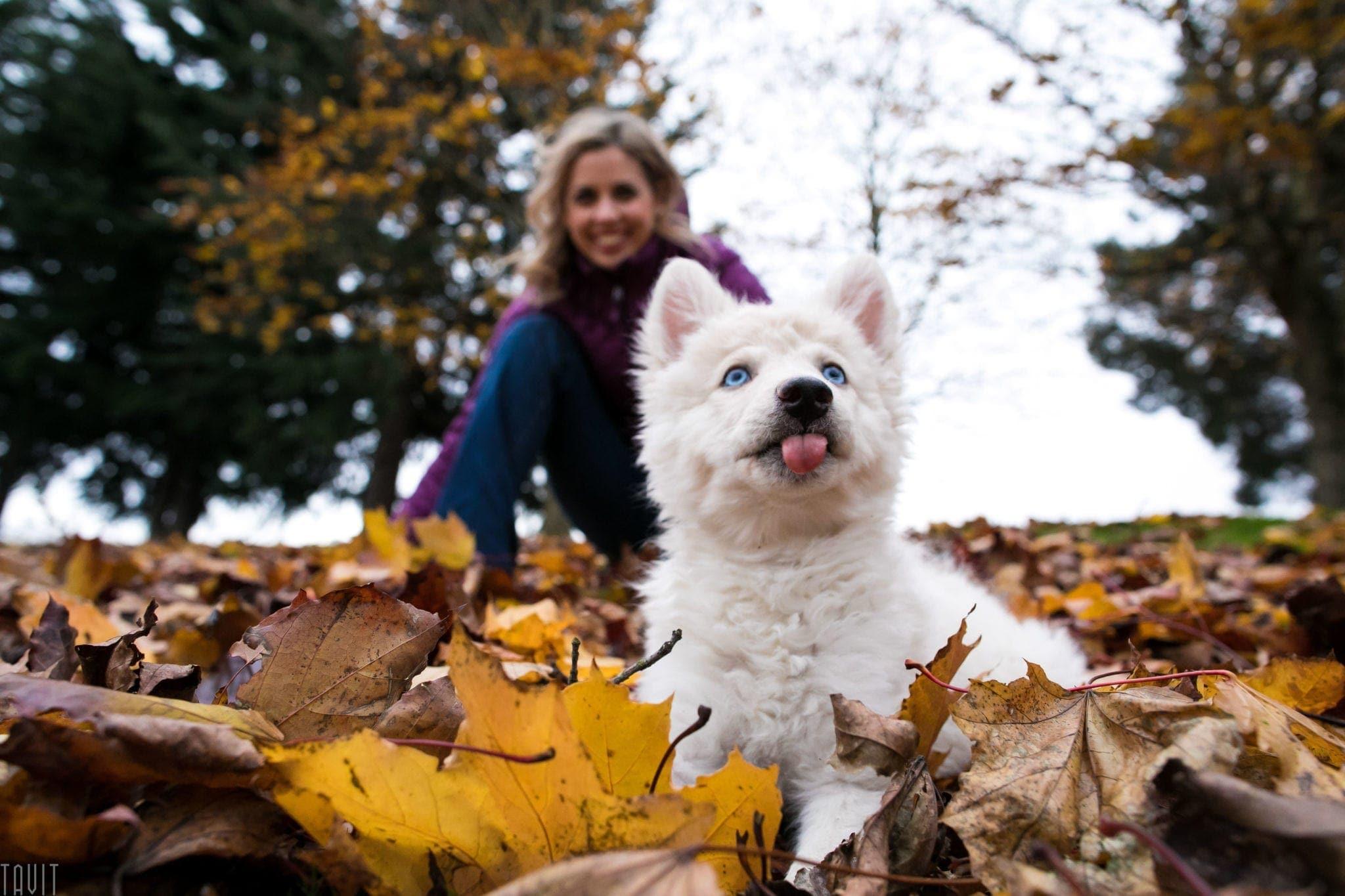 Family Portrait Pet Photography